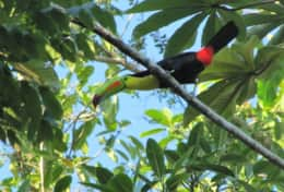 Toucan seen from the porch at Casa Grande