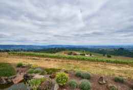 Overlook vineyards and the Cascade mountain range