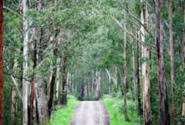 Beautiful roads in The Otway's