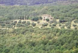 The house from the distance, in between the olive trees