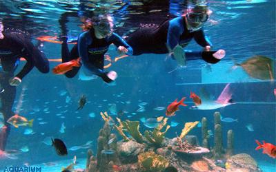 Swim With Fish Florida Keys Aquarium Encounters