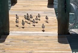 Birds on the dock