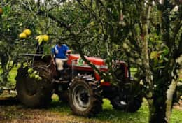 Working Orchard