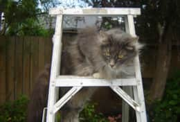 Our Cat Smokey