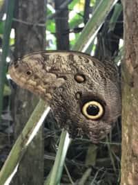 Mariposa Mangrove Cabin 7