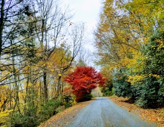 Leaf Peeping | Blue Ridge Haven