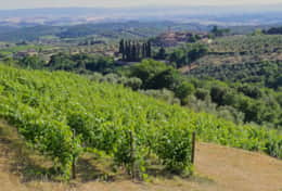 A view over the vines of the Arceno Estate