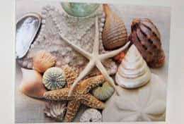 Sea shell canvas picture