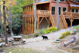 view local wildlife from your private deck