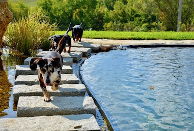 Dog friendly holiday rentals in Italy