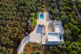 Aerial view - 16.000 square meters of olive grove