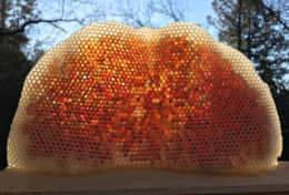 Eudaimonia Honey Comb