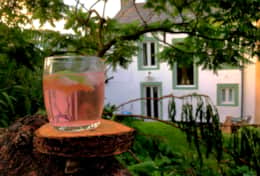 Refreshments in the rear garden