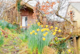 Springtime-at-Writing-Shed