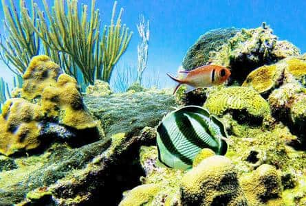Tropical fish to see while snorkeling at Sosua Beach