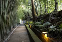 Bamboo lined path