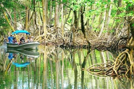 A trip through the mangroves is a perfect ending to the Paradise Island adventure
