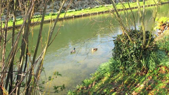 The ducks on the moat