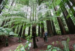 Visit cascading waterfalls and prehistoric trees in the Otways