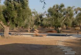 Apoikia - private swimminpool surrounded by olive trees - Specchia - Salento