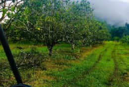 drive in orchard with mist on mountains