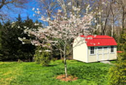 Back yard features springtime cherry tree and Deborah's garden shed.