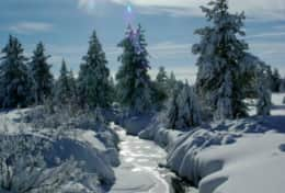 creekwinter2[1]