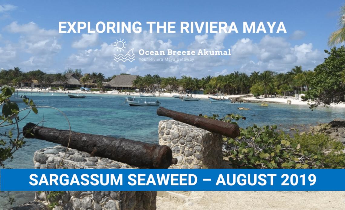 Sargassum Seaweed in the Riviera Maya Aug 2019