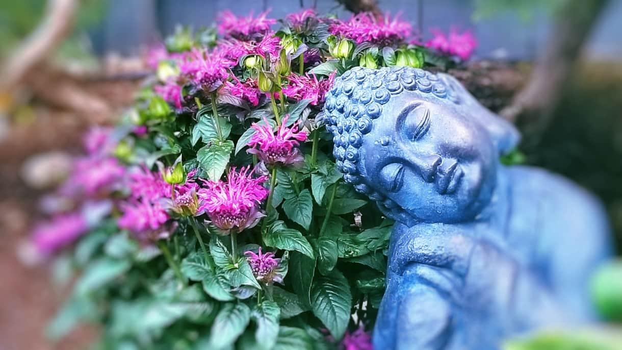 Our peaceful garden Buddha