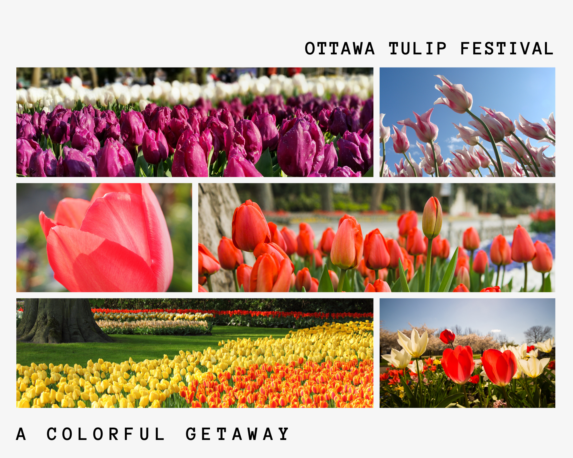 Canadian Tulip Festival in Ottawa