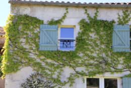 Wisteria front view