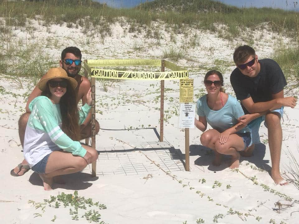 Sea Turtle nest on the Cape