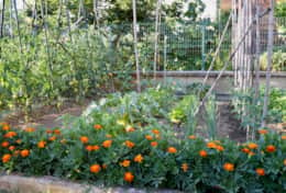 Vegetable garden at Trasimeno Bungalow