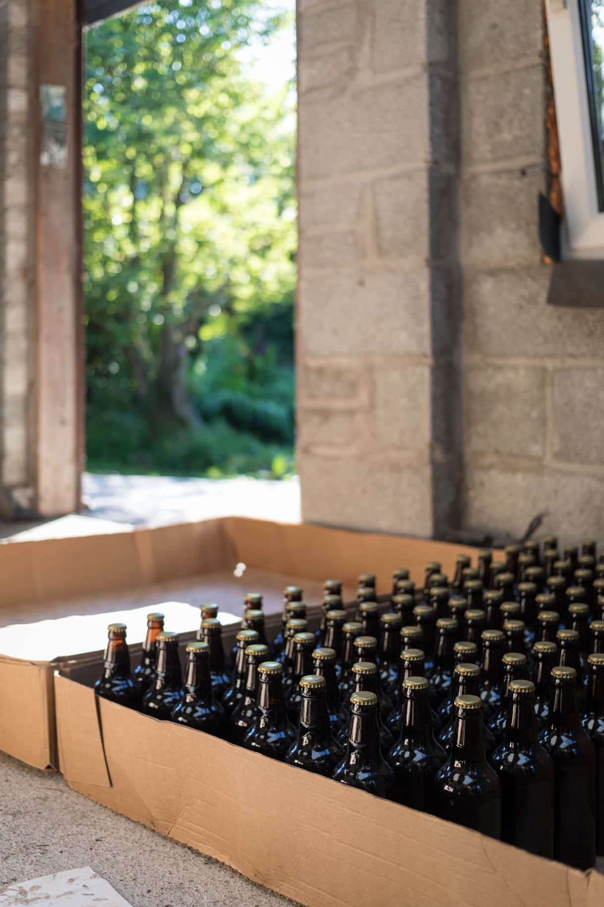bottles of beer waiting to be labeled