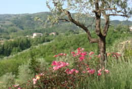Holiday-Rentals-in-Tuscany-Florence-Villa-Tosca (34)