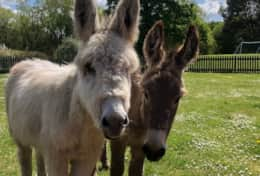 Meet our friendly Donkeys.