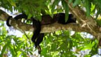 Congo Mangrove Cabin 8