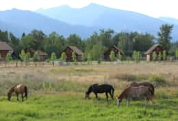 Horses Cabins Mountains