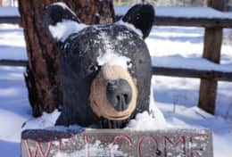 Our bears are welcoming!