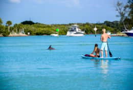 Dolphin Jetty Rentals