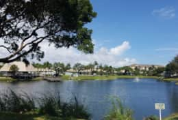Palm Lake View