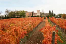 Agriturismo Montefalco, the surrounding landscape in autumn