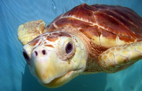 Learn about endangered turtles at the Sea Turtle Hospital