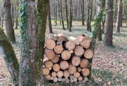 Wood pile in the wood