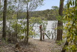 Towering bush - The River House Gipsy Point - Good House Holiday Rentals