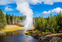 Geyser on Firehole River In Yellowstone Park