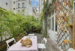 The terrace with the family cat