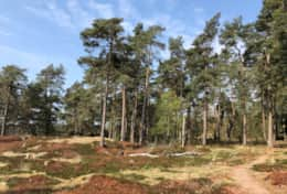 180422 - Heezeberg - National Park Drents Friese Wold
