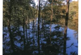 The Waccamaw River