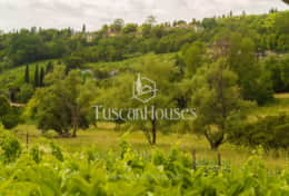 VILLA DE FIORI-Tuscanhouses-Villa with pool close to Florence-Holiday rental093